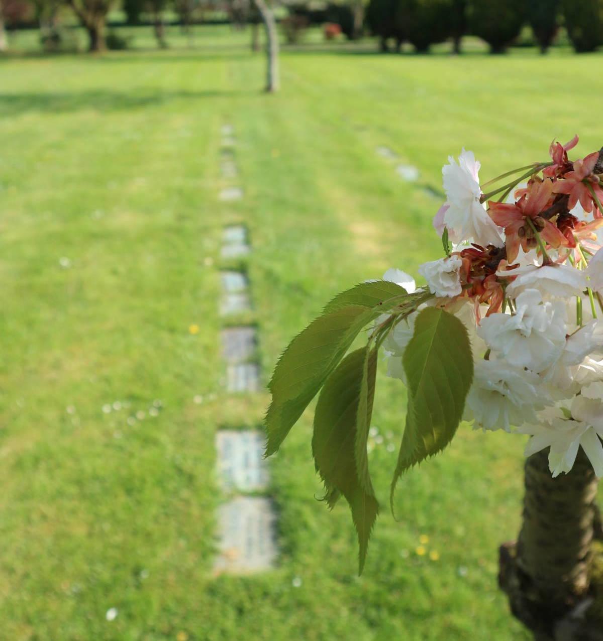 http://drakememorialpark.co.uk/upload/gallery_image/07c334270319114730.JPG