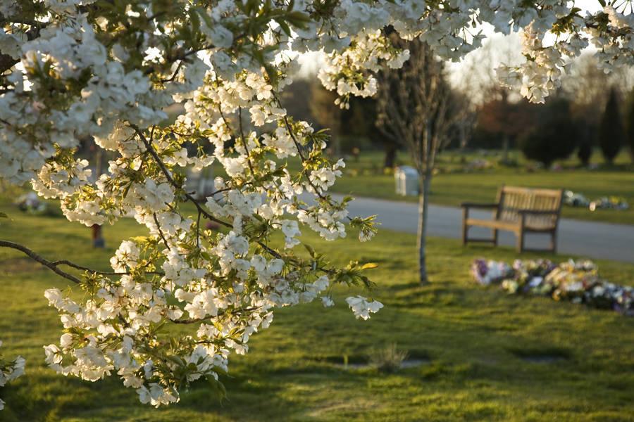 http://drakememorialpark.co.uk/upload/gallery_image/25eaea270319114831.jpg