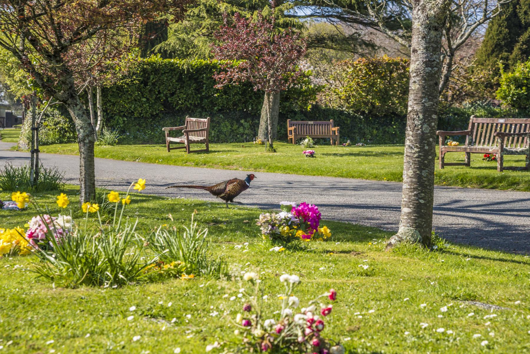 http://drakememorialpark.co.uk/upload/gallery_image/400119270319114641.JPG