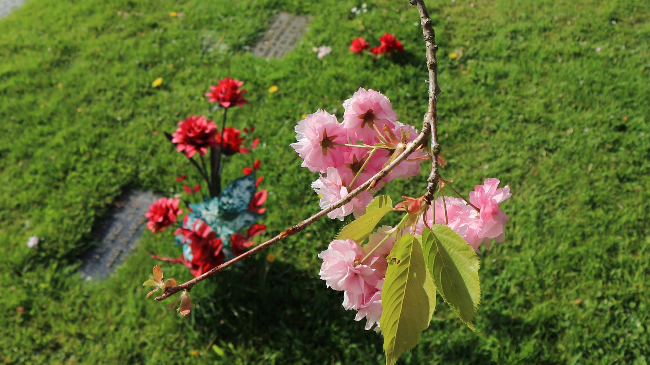 http://drakememorialpark.co.uk/upload/gallery_image/6efc3b270319114701.JPG