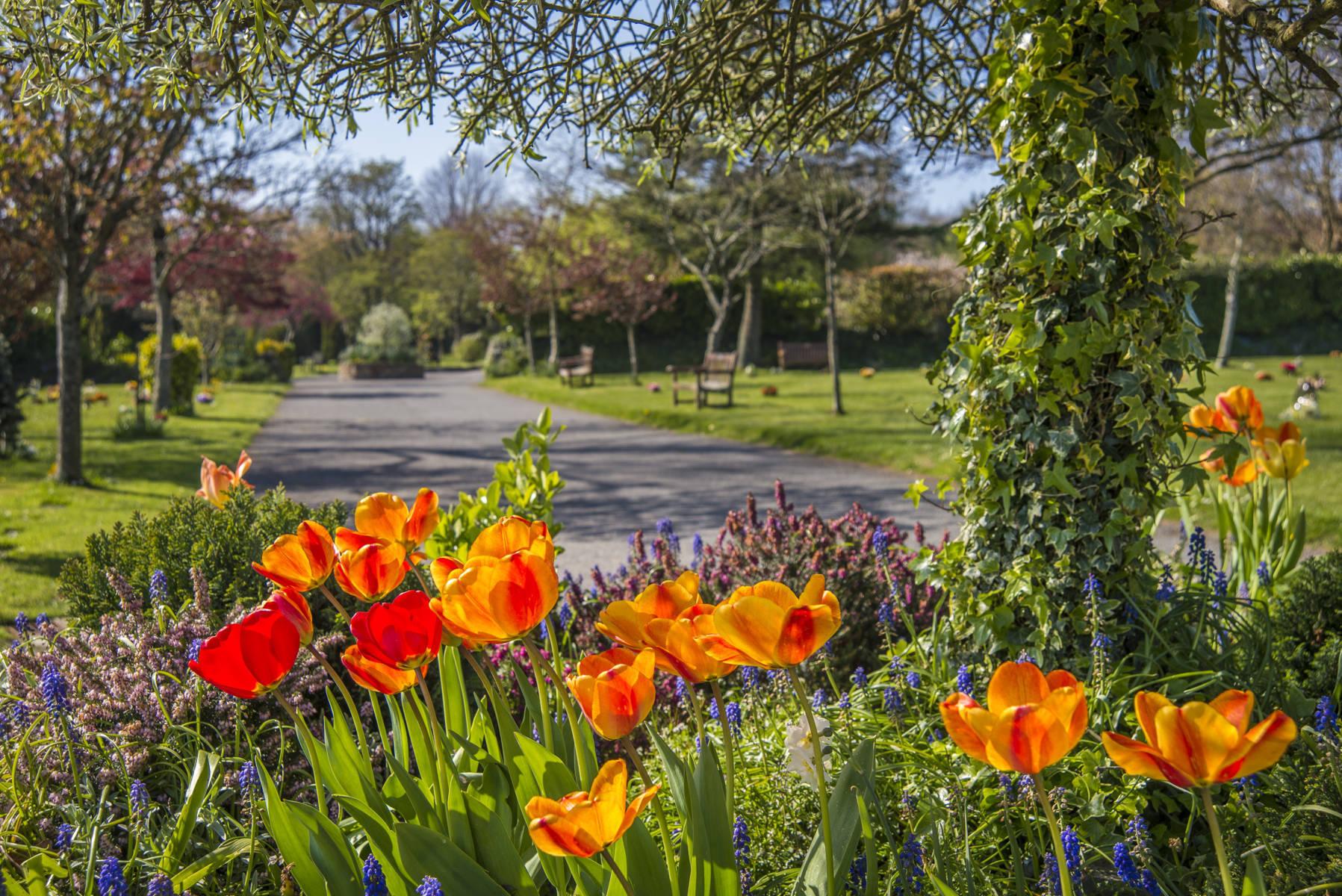 http://drakememorialpark.co.uk/upload/gallery_image/8b91b1270319114700.JPG