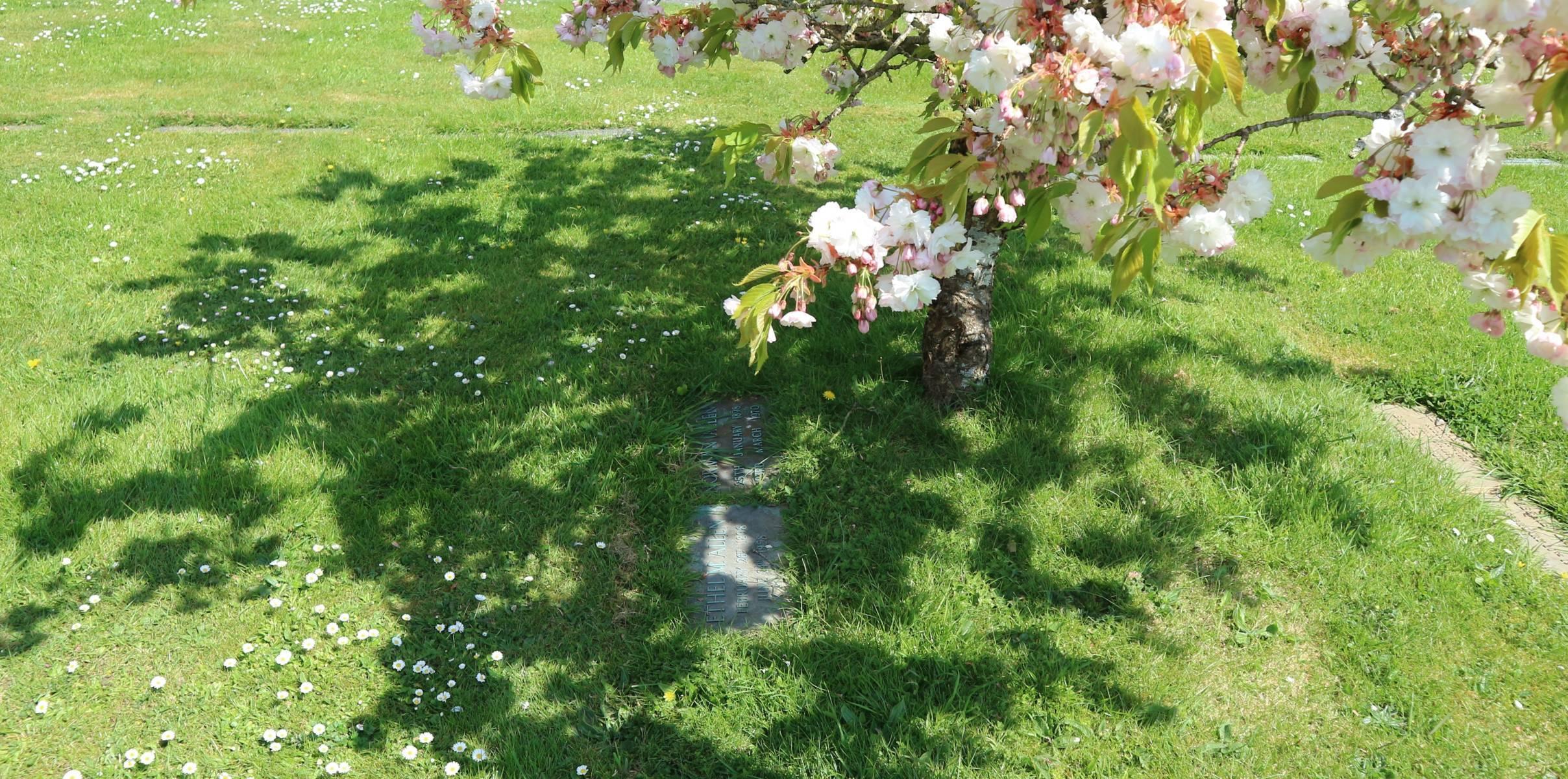 http://drakememorialpark.co.uk/upload/gallery_image/a169b4270319114816.JPG