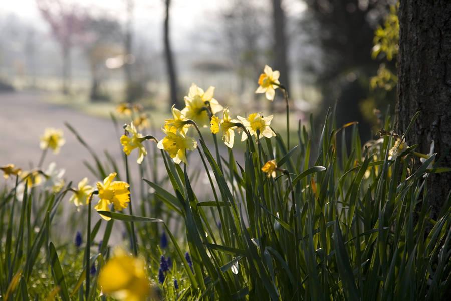 http://drakememorialpark.co.uk/upload/gallery_image/ca43d2270319114817.jpg