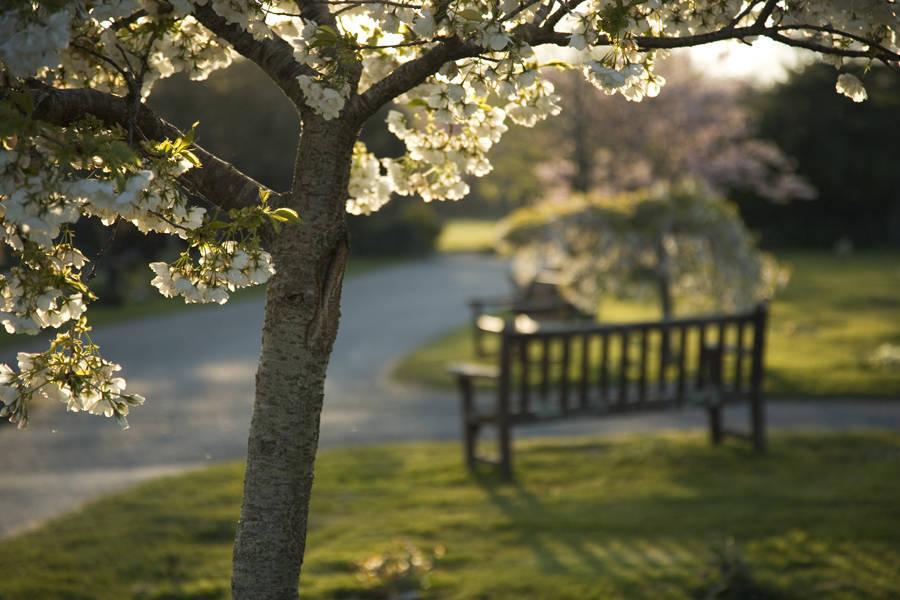 http://drakememorialpark.co.uk/upload/gallery_image/e6f3a4270319114817.jpg