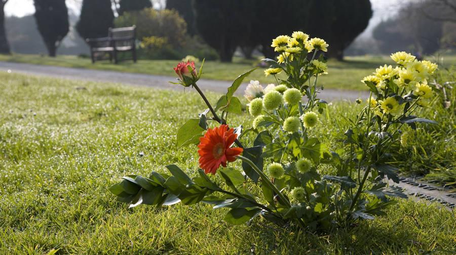 http://drakememorialpark.co.uk/upload/gallery_image/f1436a270319114817.jpg