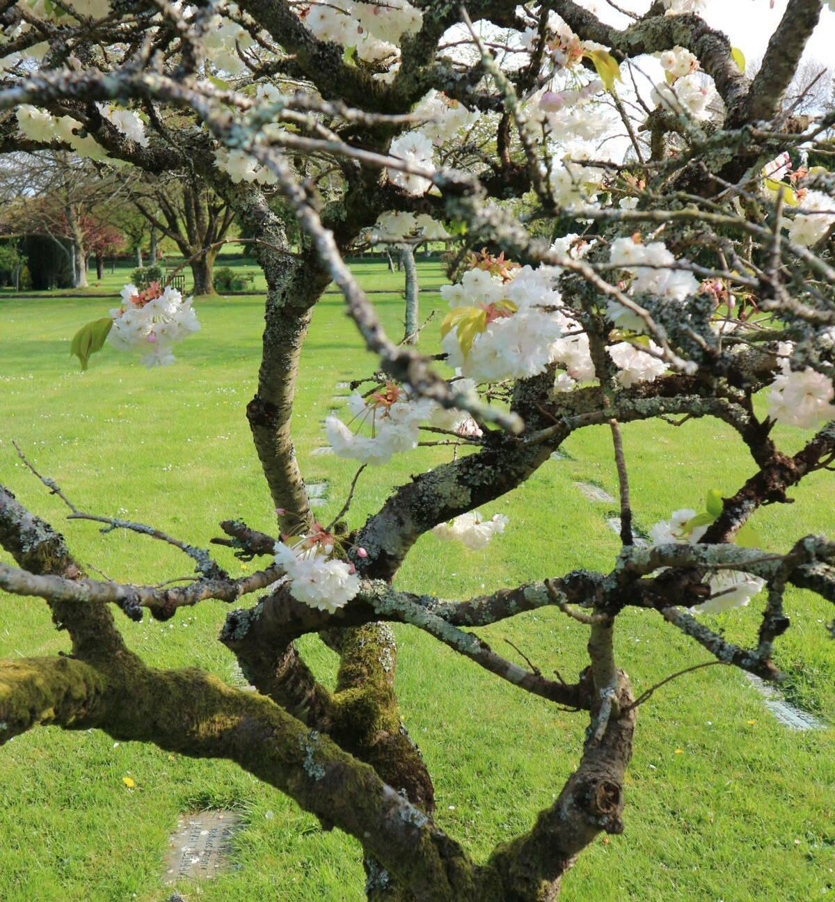 http://drakememorialpark.co.uk/upload/gallery_image/f38fd6270319114816.JPG